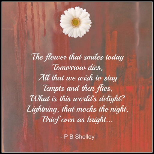 the flower that smiles today