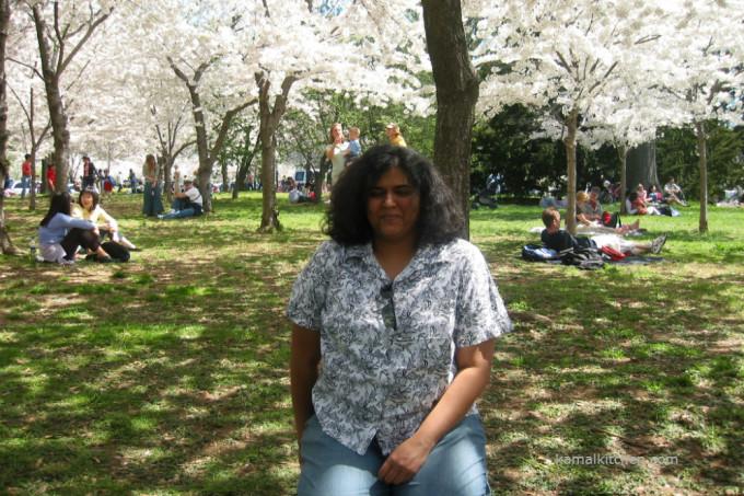 Cherry Blossom Festival – Spring Rituals