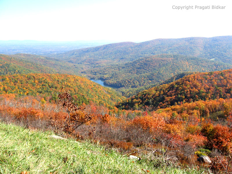 Shenandoah Skyline Drive Fall Colors